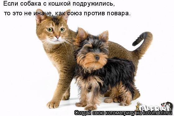 Котоматрица: Если собака с кошкой подружились,  то это не иначе, как союз против повара.