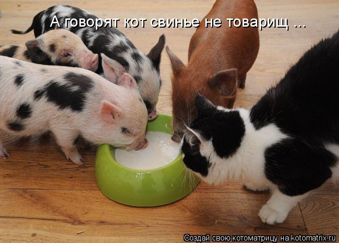 Котоматрица: А говорят кот свинье не товарищ ...