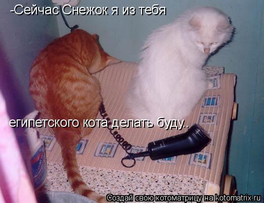 Котоматрица: -Сейчас Снежок я из тебя  египетского кота делать буду..