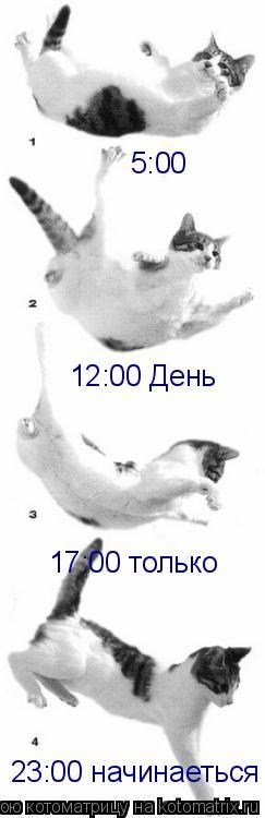 Котоматрица: 17:00 только 5:00 12:00 День 23:00 начинаеться