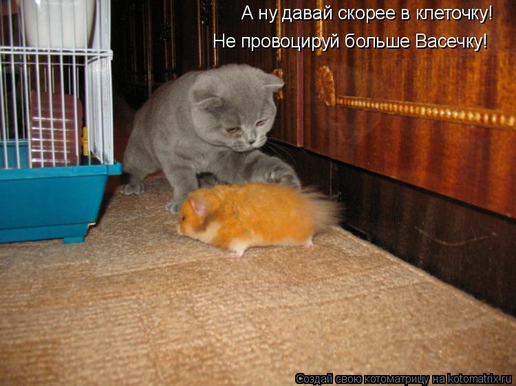 Котоматрица: А ну давай скорее в клеточку! Не провоцируй больше Васечку!