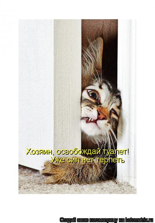 Котоматрица: Хозяин, освобождай туалет! Уже сил нет терпеть