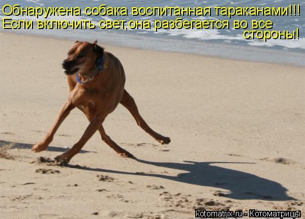 Котоматрица: Обнаружена собака воспитанная тараканами!!! Если включить свет,она разбегается во все стороны!