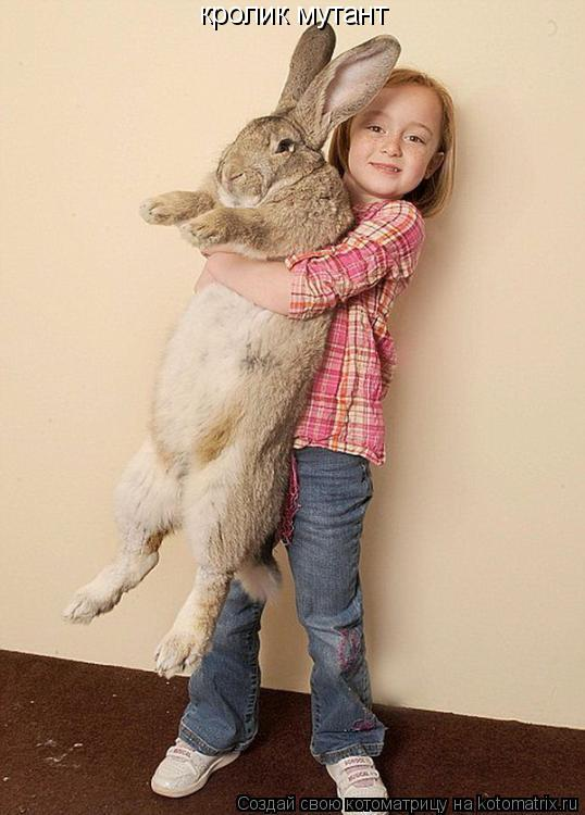 Котоматрица: кролик мутант