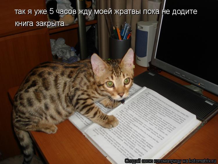 Котоматрица: так я уже 5 часов жду моей жратвы пока не додите книга закрыта