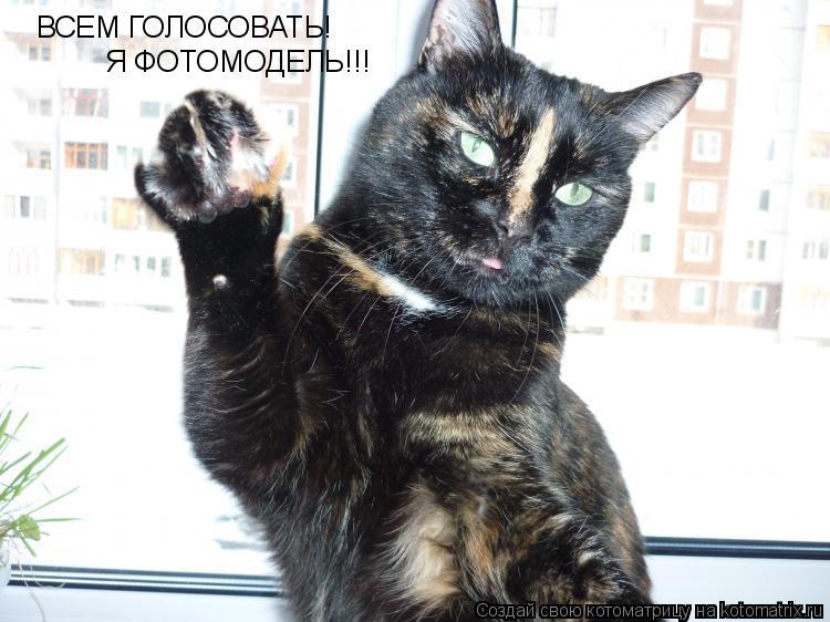 Котоматрица: ВСЕМ ГОЛОСОВАТЬ!  Я ФОТОМОДЕЛЬ!!!