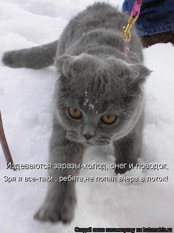 Котоматрица: Издеваются заразы-холод, снег и поводок, Зря я все-таки , ребята,не попал вчера в лоток!