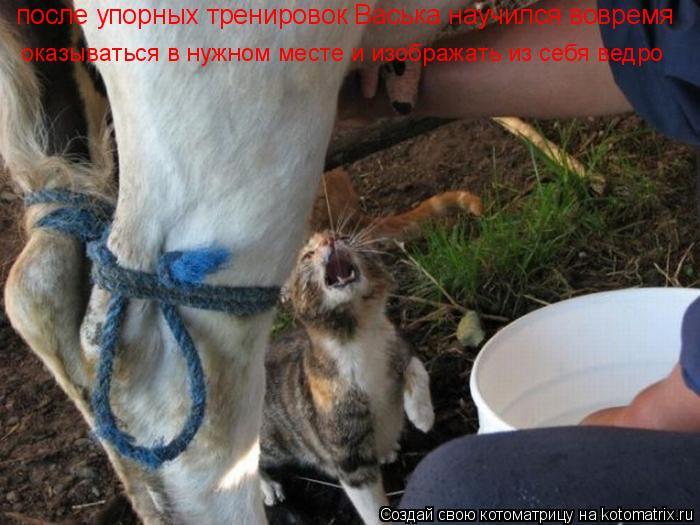 Котоматрица: после упорных тренировок Васька научился вовремя оказываться в нужном месте и изображать из себя ведро