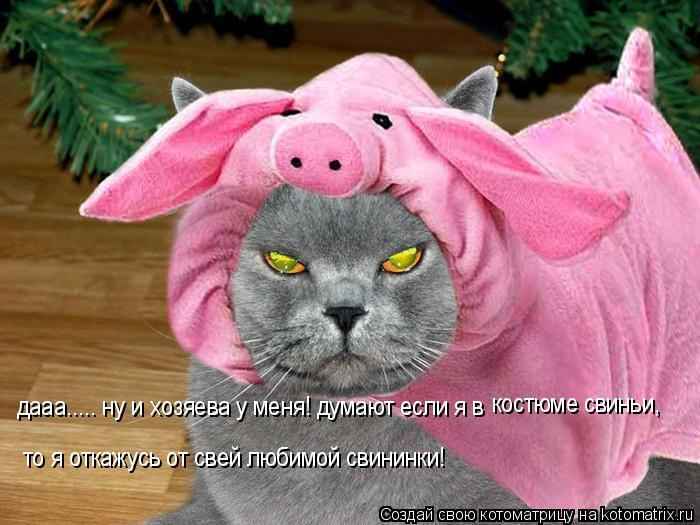 Котоматрица: дааа..... ну и хозяева у меня! думают если я в   костюме свиньи, то я откажусь от свей любимой свининки!