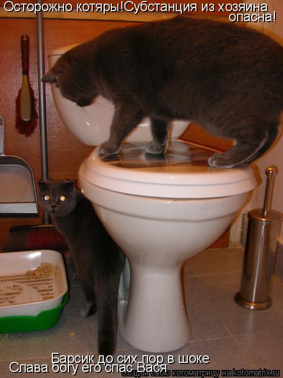Котоматрица: Осторожно котяры!Субстанция из хозяина  опасна! Барсик до сих пор в шоке Слава богу его спас Вася