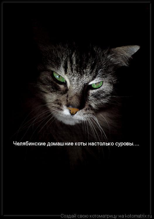 Котоматрица: Челябинские домашние коты настолько суровы....
