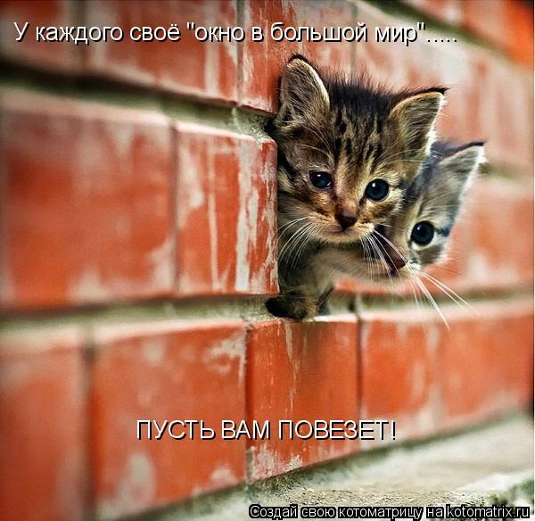 """Котоматрица: У каждого своё """"окно в большой мир""""..... ПУСТЬ ВАМ ПОВЕЗЕТ!"""