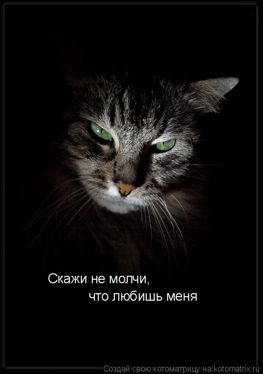 Котоматрица: Скажи не молчи, что любишь меня
