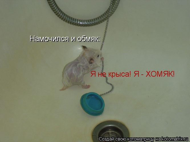 Котоматрица: Намочился и обмяк: Я не крыса! Я - ХОМЯК!