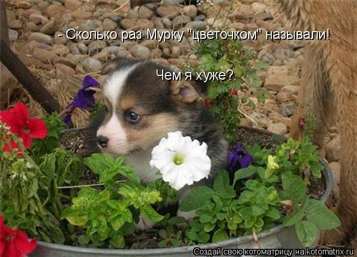 """Котоматрица: - Сколько раз Мурку """"цветочком"""" называли! Чем я хуже?"""