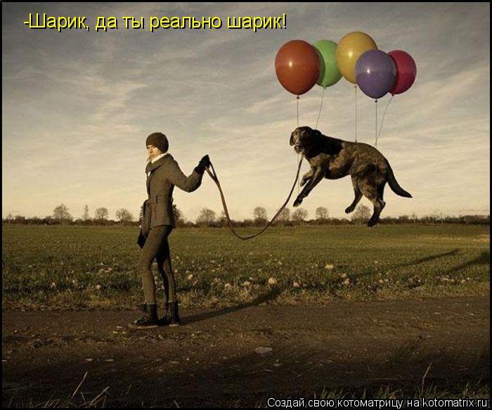Котоматрица: -Шарик, да ты реально шарик!