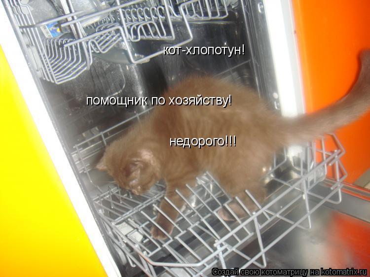 Котоматрица: кот-хлопотун! помощник по хозяйству! недорого!!!