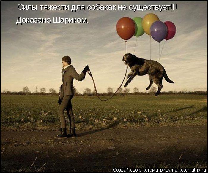 Котоматрица: Силы тяжести для собакак не существует!!! Доказано Шариком.