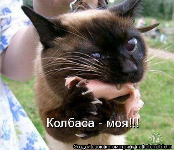 Котоматрица: Колбаса - моя!!!