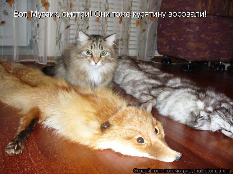 Котоматрица: Вот, Мурзик, смотри! Они тоже курятину воровали!