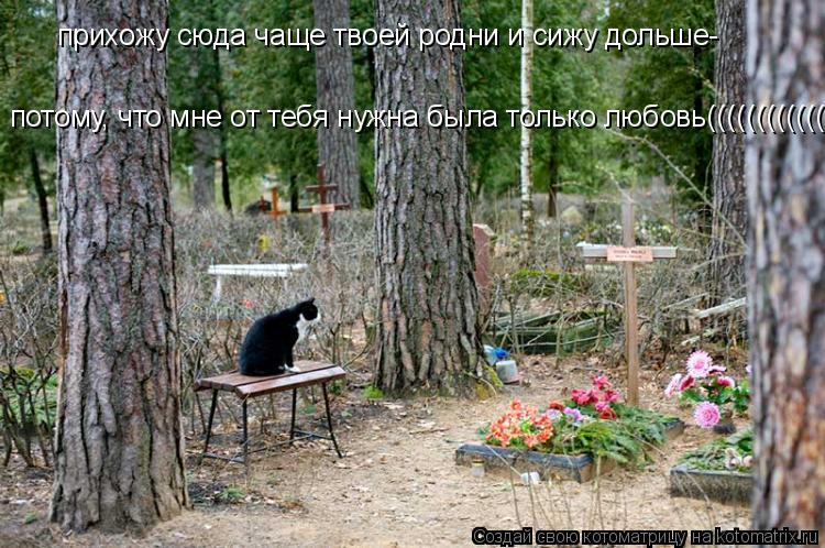 Котоматрица: прихожу сюда чаще твоей родни и сижу дольше- потому, что мне от тебя нужна была только любовь((((((((((((