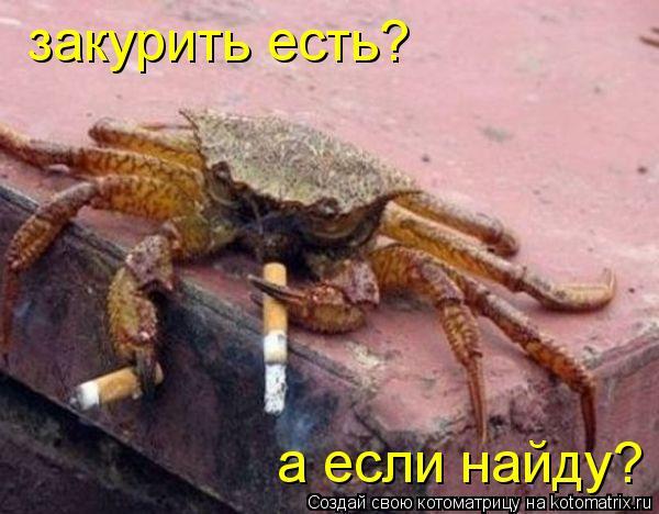 Котоматрица: закурить есть? а если найду?
