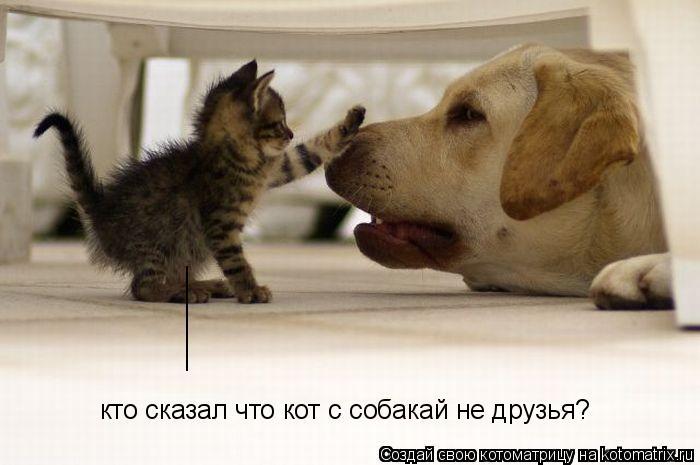 Котоматрица: кто сказал что кот с собакай не друзья? _______