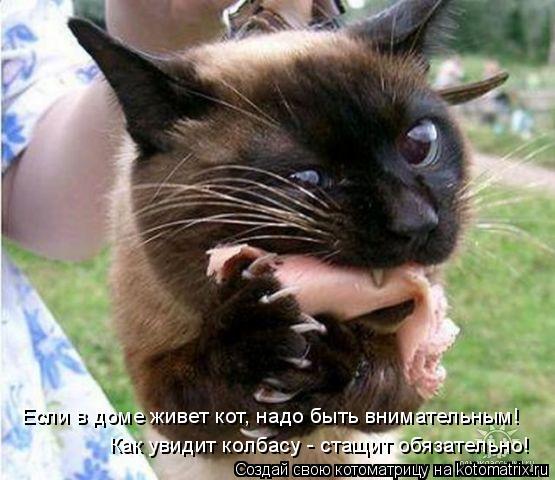 Котоматрица: Если в доме живет кот, надо быть внимательным! Как увидит колбасу - стащит обязательно!
