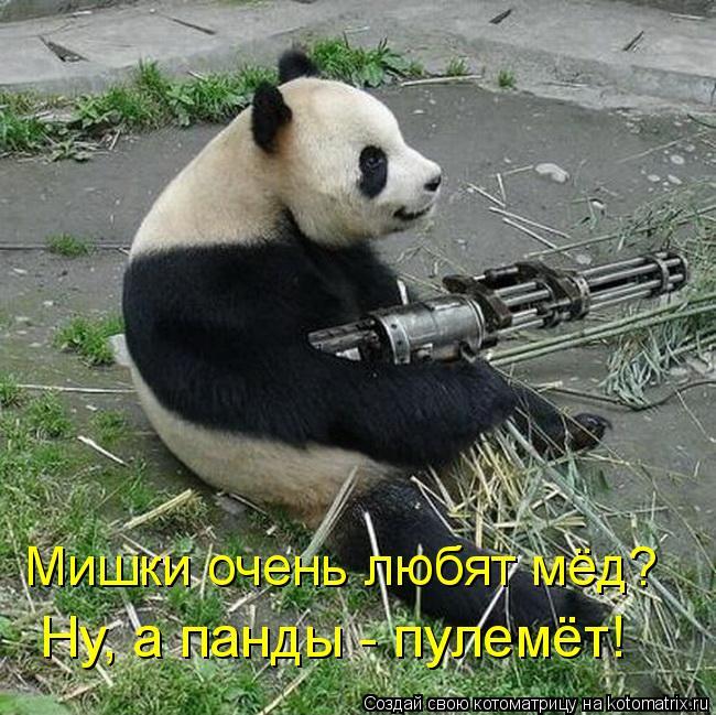 Котоматрица: Мишки очень любят мёд?  Ну, а панды - пулемёт!
