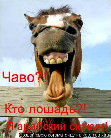 Котоматрица: Чаво?! Кто лошадь?!  Я арабский скакун!