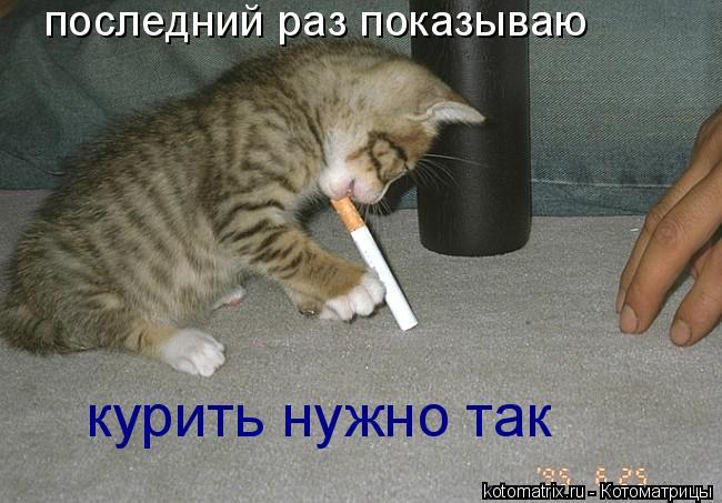 Котоматрица: последний раз показываю курить нужно так