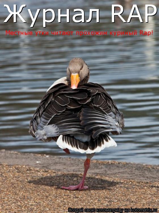Котоматрица: Журнал RAP Местные утки читают прохожим куриный Rap!