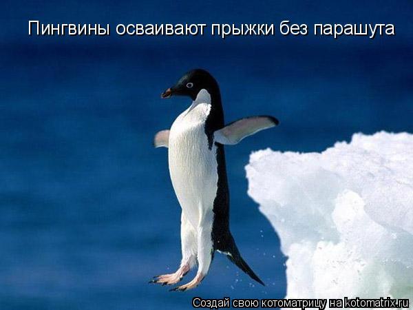 Котоматрица: Пингвины осваивают прыжки без парашута