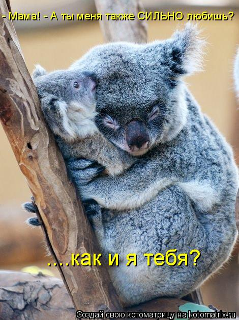 Котоматрица: - Мама! - А ты меня также СИЛЬНО любишь?  ....как и я тебя?