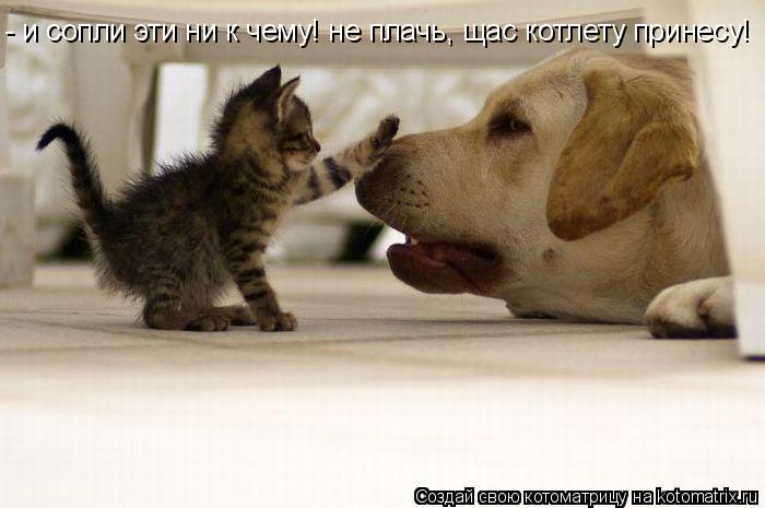 Котоматрица: - и сопли эти ни к чему! не плачь, щас котлету принесу!
