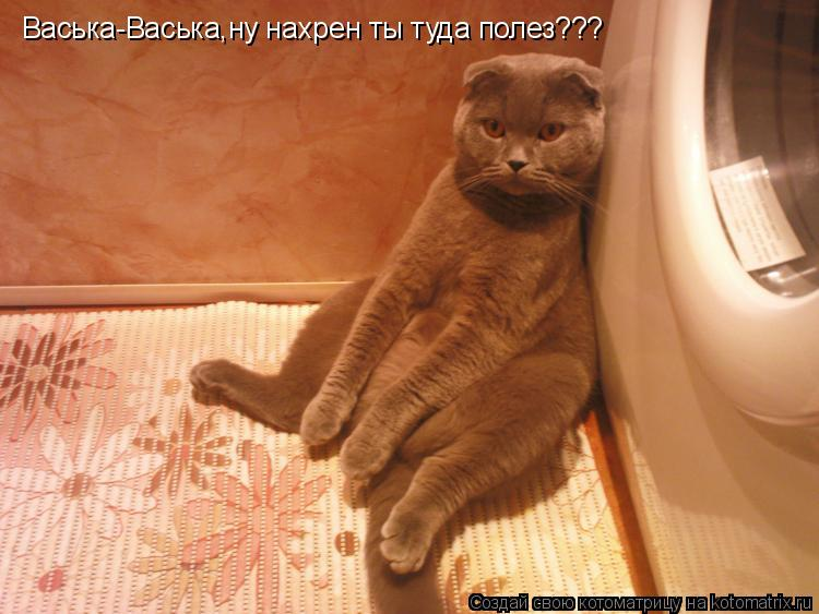 Котоматрица: Васька-Васька,ну нахрен ты туда полез???