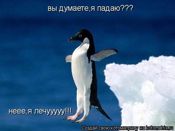 Котоматрица: вы думаете,я падаю??? неее,я лечууууу!!!