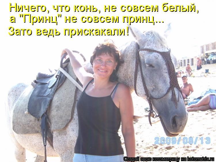 """Котоматрица: Ничего, что конь, не совсем белый, а """"Принц"""" не совсем принц... Зато ведь прискакали!"""