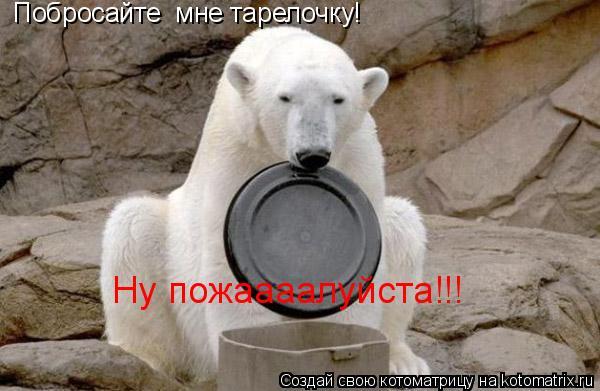 Котоматрица: Побросайте  мне тарелочку! Ну пожаааалуйста!!!
