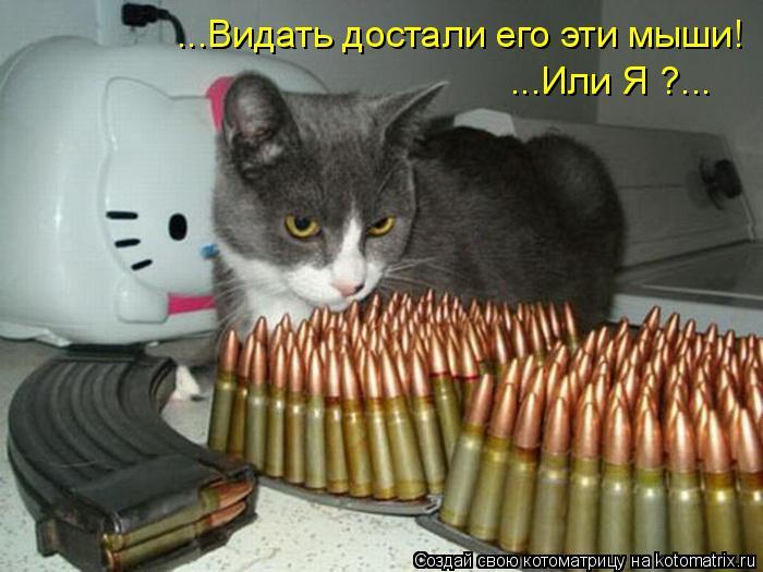 Котоматрица: ...Видать достали его эти мыши! ...Или Я ?...