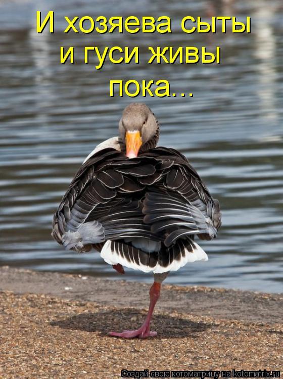 Котоматрица: И хозяева сыты и гуси живы пока...