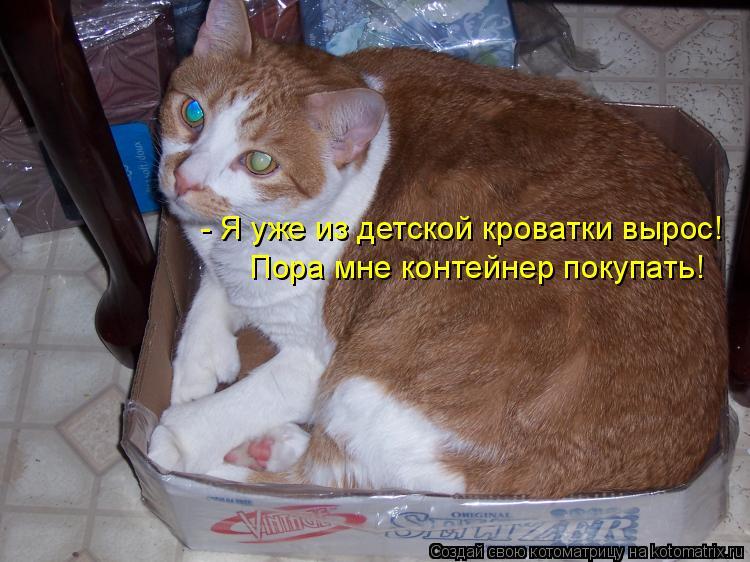 Котоматрица: - Я уже из детской кроватки вырос! Пора мне контейнер покупать!