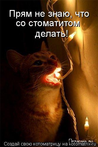 Котоматрица: Прям не знаю, что  со стоматитом  делать!