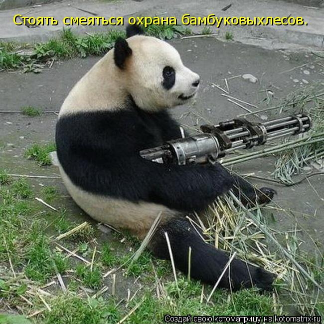 Котоматрица: Стоять смеяться охрана бамбуковыхлесов.
