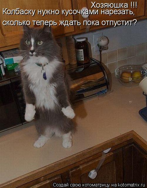 Котоматрица: Хозяюшка !!! сколько теперь ждать пока отпустит? Колбаску нужно кусочками нарезать,