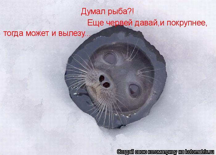 Котоматрица: Думал рыба?! Еще червей давай,и покрупнее, тогда может и вылезу...