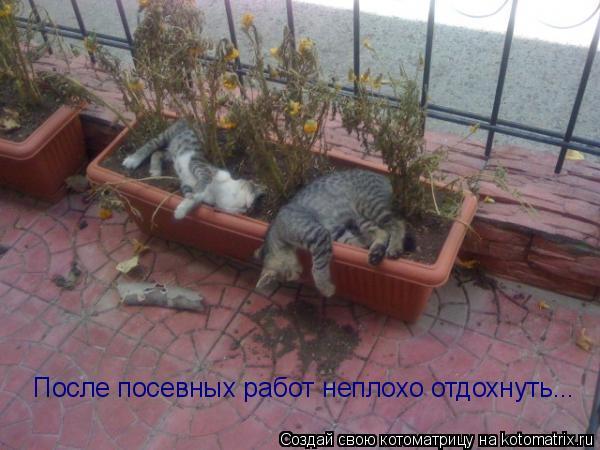 Котоматрица: После посевных работ неплохо отдохнуть...