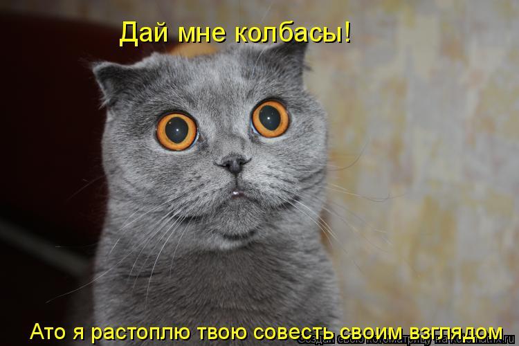 Котоматрица: Дай мне колбасы! Ато я растоплю твою совесть своим взглядом