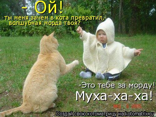 Котоматрица: - Ой! ты меня зачем в кота превратил, волшубная морда твоя? -Это тебе за морду! Муха-ха-ха!