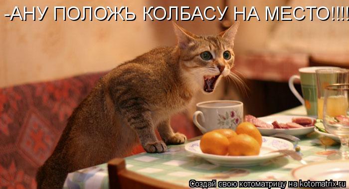 Котоматрица: -АНУ ПОЛОЖЬ КОЛБАСУ НА МЕСТО!!!!!!